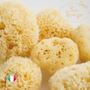 Natural Sponges from the Mediterranean Sea  (Italy)