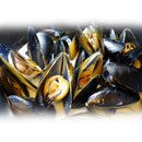 Whole-Shell Mussel (Hong Kong)