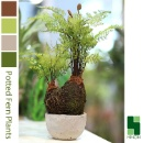 Potted Fern Artificial Plant (Hong Kong)