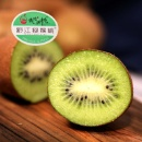 Qianjiang Green Meat Kiwi (Mainland China)